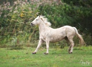 Un cheval heureux!