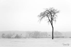 L'arbre de Mirabel