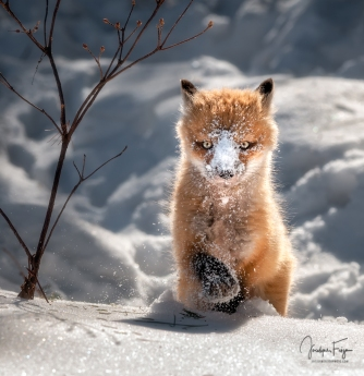 Plaisirs d'hiver
