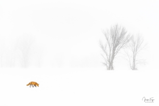 Survivre l'hiver