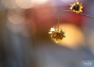 Les fleurs n'ont pas dit leur dernier mot (6/6)