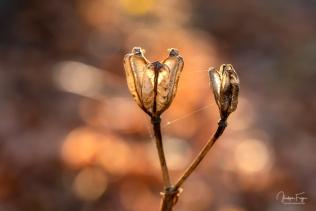 Les fleurs n'ont pas dit leur dernier mot (2/6)
